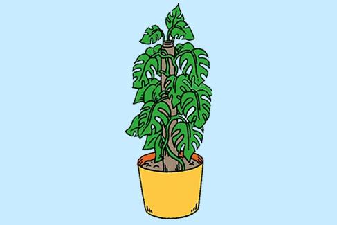 PLANT_487px