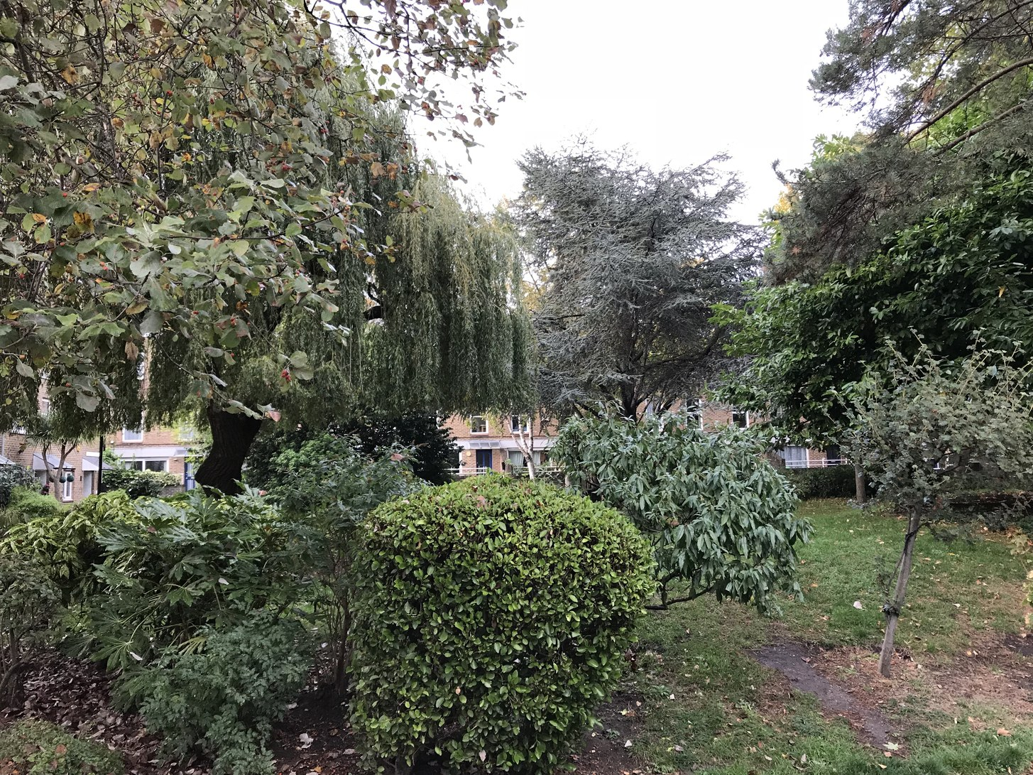 The courtyard is overgrown: ideal for a game of hide and seek