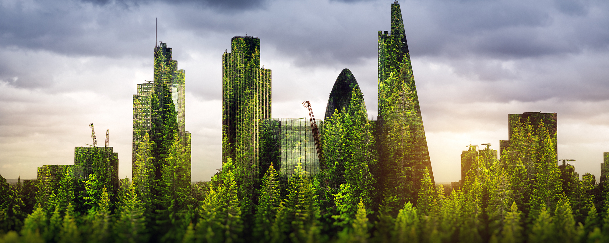 Trees in the City (picture: Getty)