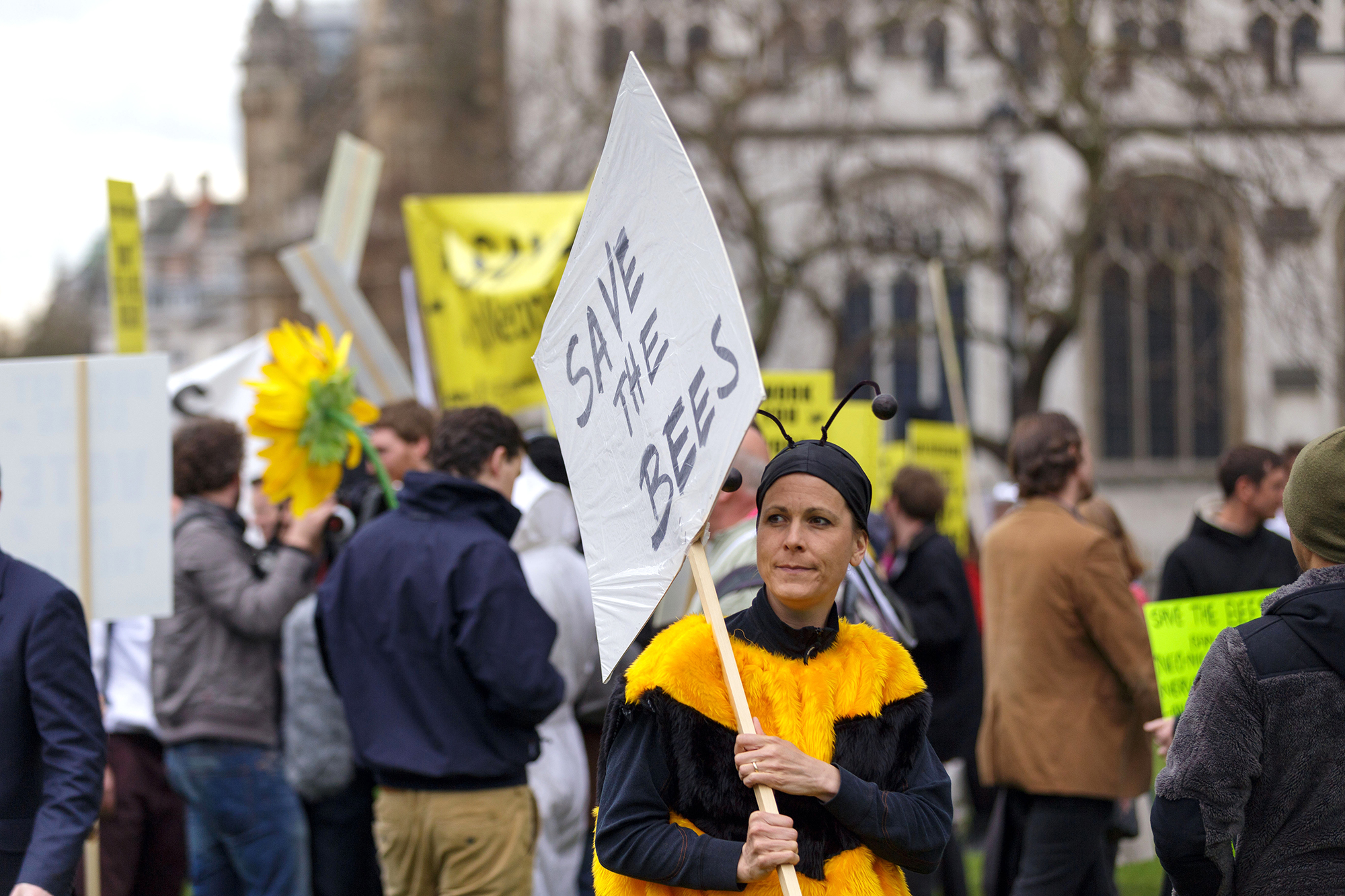 Beekeepers have protested against the use of potentially harmful pesticides. Photo: Alamy