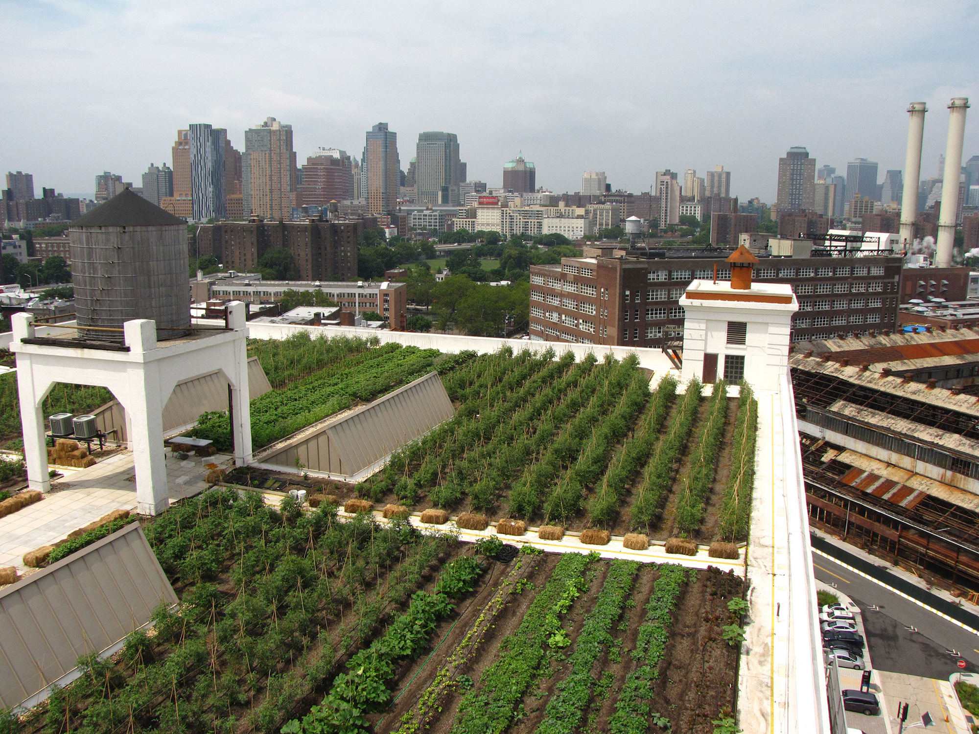Brooklyn Grange farm covers 5.6 acres of rooftop space