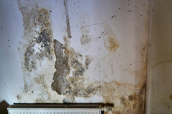 Housing Ombudsman to investigate damp and mould problems in sector