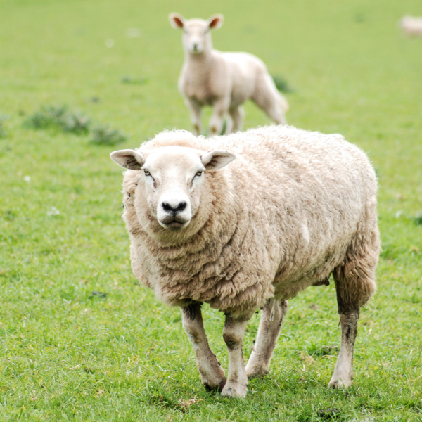 Blog post: Sustainability - wool has all the answers!