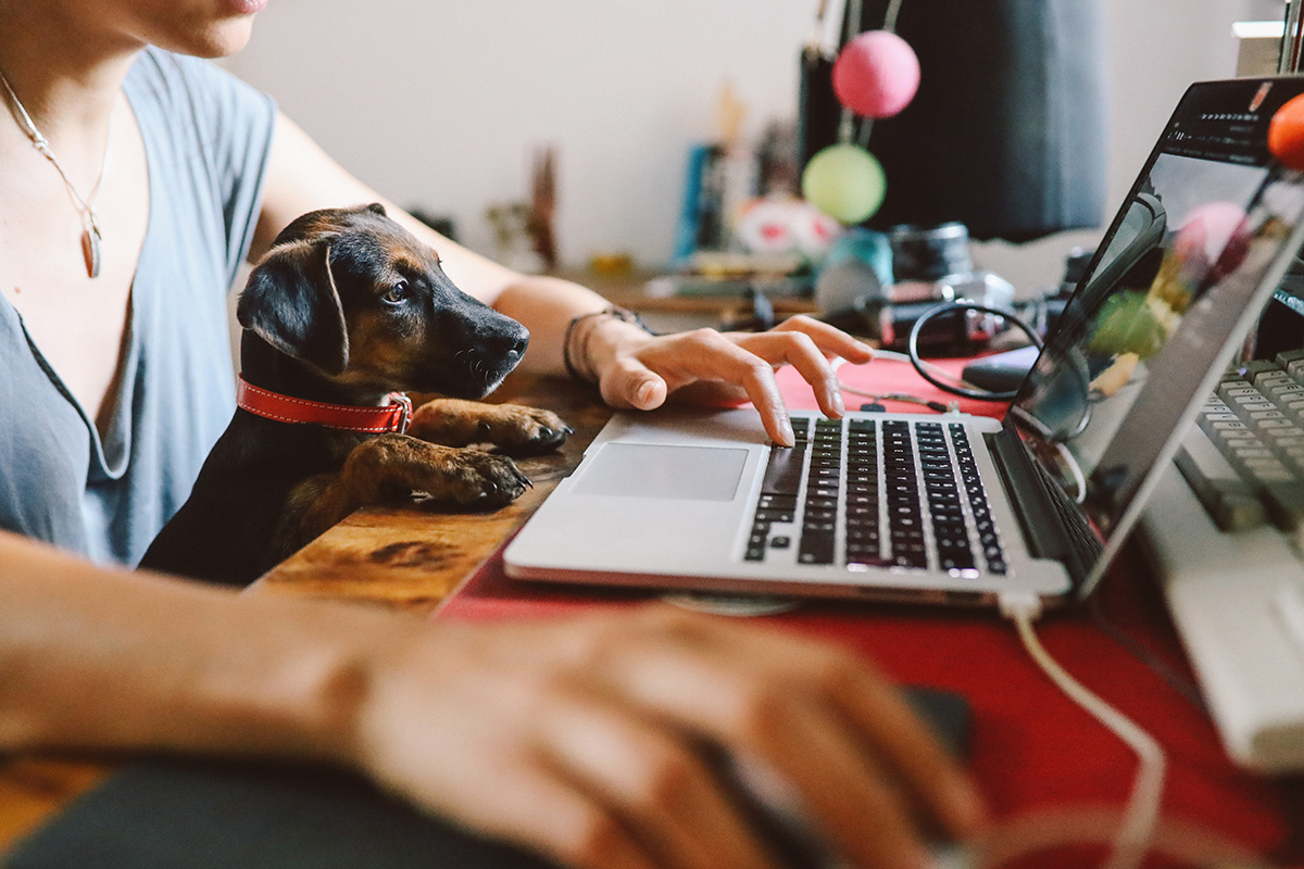 Pets are welcome on video calls at Home Group (picture: Getty)